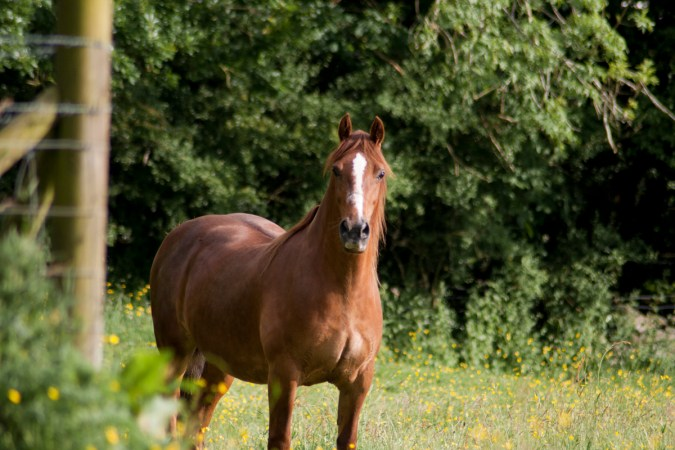 A horse _ LlanfairPG, Anglesey