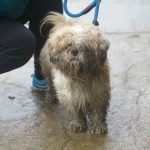 Barney - who has had a grooming since this picture was taken