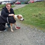 Frank the Staffie with DDR Volunteer Barbara