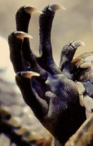 Claw image for D&D 5th edition Primal Savagery spell