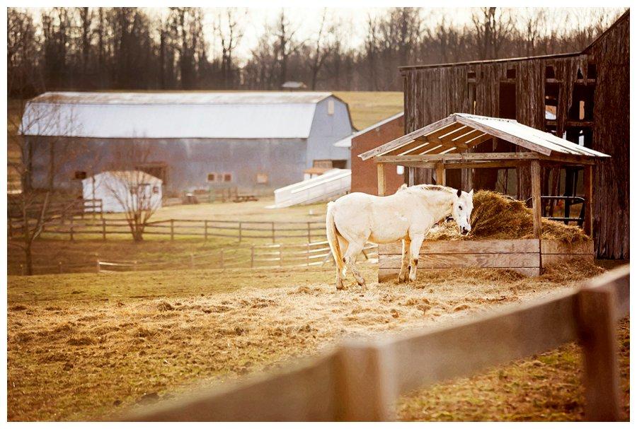 calvert county barns-1