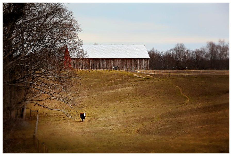 calvert county barns-3