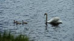 swans reservoir