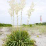 Baregat Light New Jersey by Robert Mullenix / Dunwanderin Digital Studio