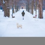 Kenyon College Winter by Robert Mullenix / Dunwanderin Digital Studio