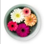 Flowers by Robert Mullenix / Dunwanderin Digital Studio