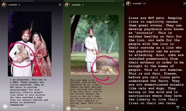 شیر کے فوٹو شوٹ پر مشال خان برہم