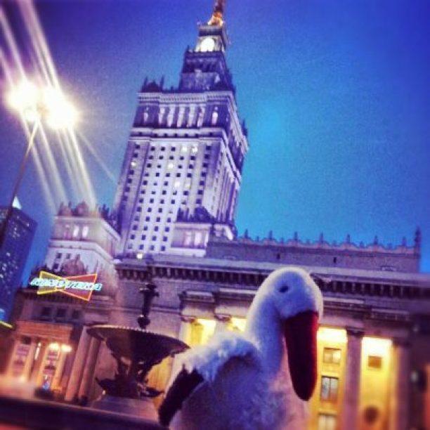 Bocian w Warszawie przy Pałacu Kultury i Nauki