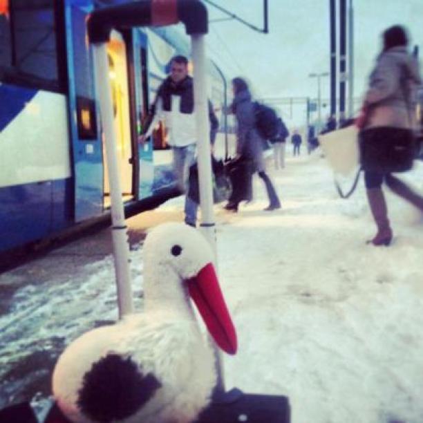Bocian w podróży pociągiem
