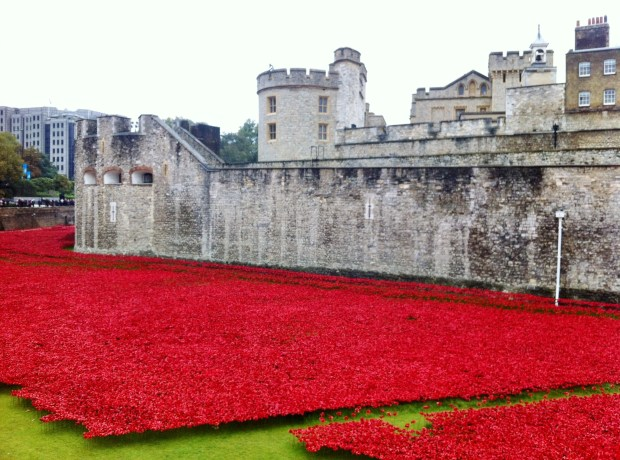 londyn-maki-tower-hill-towerpoppies-poppy-poppies-tower-of-london-fosa-zamku-ofiary-i-wojna-swiatowa