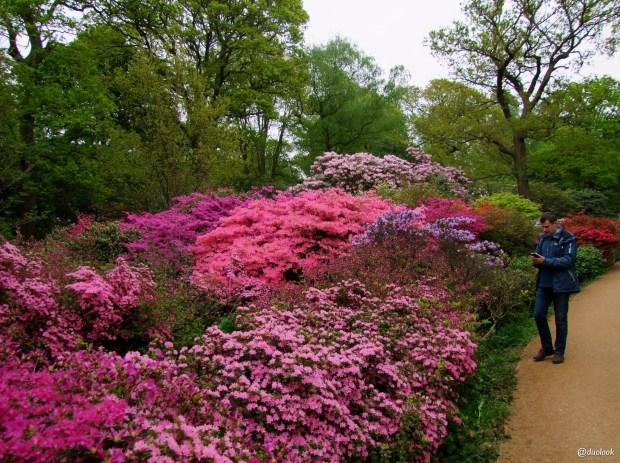 isabella-plantation-richmond-park-londyn-natura-15