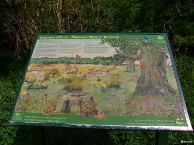 przyroda-zwierzeta-richmond-park-londyn-natura-zwiedzanie-atrakcje-01