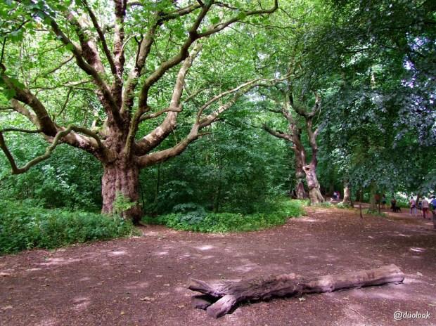 hampstead-heath-londyn-dzika-przyroda-natura