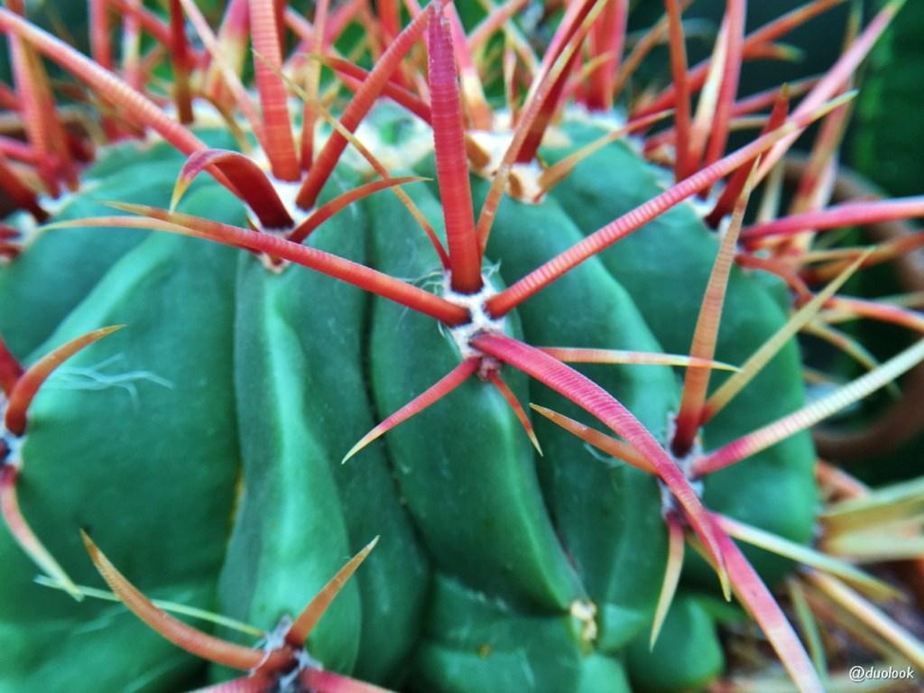 kaktusy w Londynie