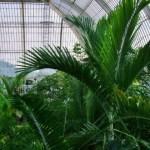 Najpiękniejsze palmiarnie w Londynie