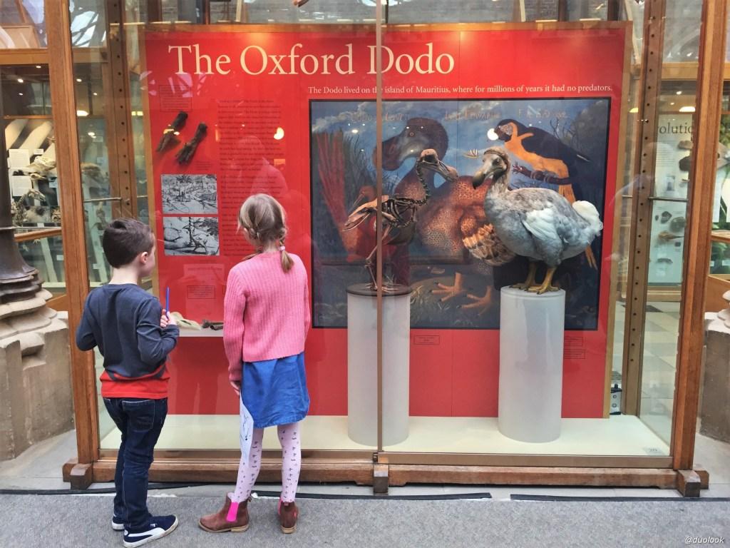 Ptak Dodo w Oksfordzie