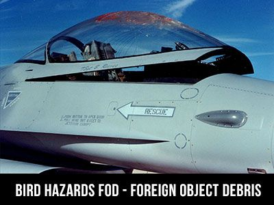 foreign object debris damage bird hazard