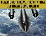 Blackbird Friday