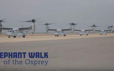 Elephant Walk of the Osprey