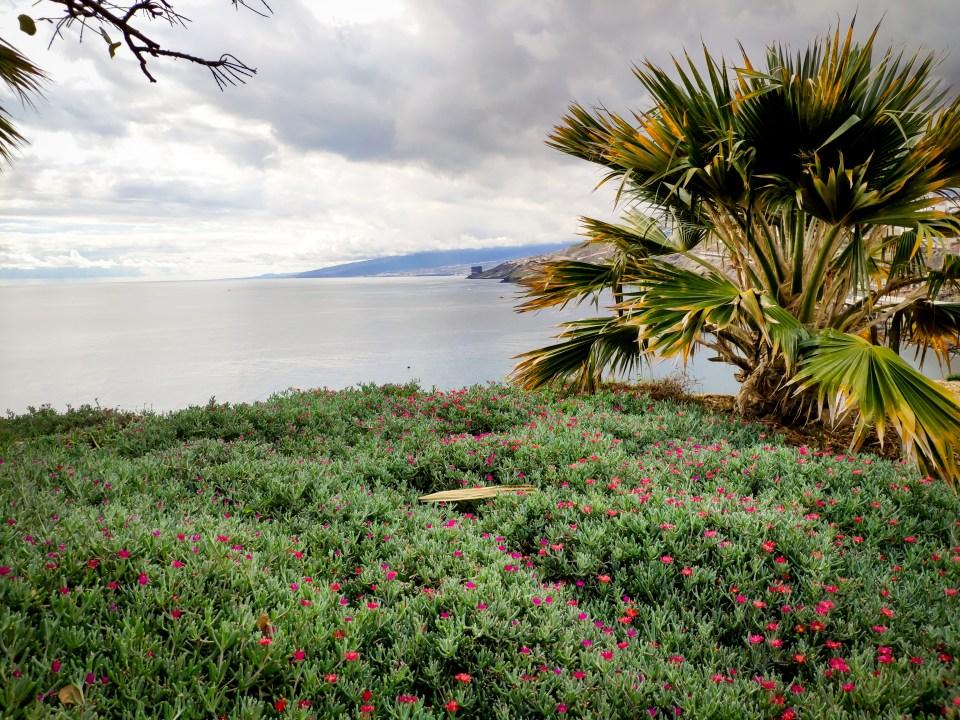 Palma a oceán v botanickej záhrade v Santa Cruz