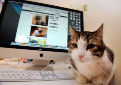 Site internet pour un élevage de chat