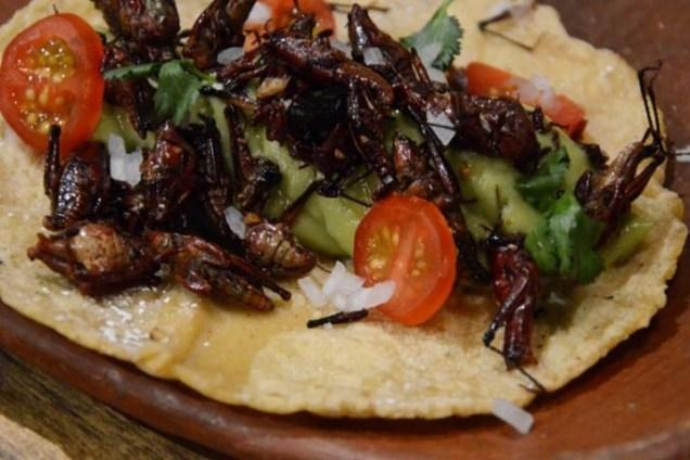 comida con insectos