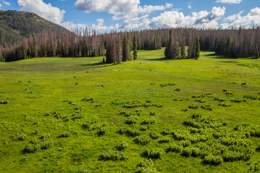 View of the meadow and Spruce covered knoll