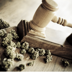 The Marijuana Industry Pulls Victory From the Jaws of a DEA Defeat