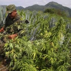 How legal U.S. weed is decreasing Mexico cartel profits