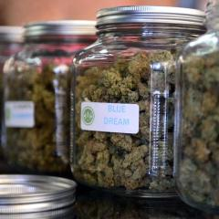 Medical Marijuana Seems To Reduce Deaths From Pharmaceuticals
