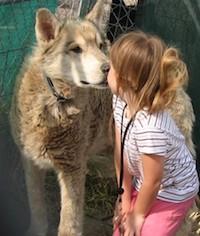 Meet the Wolves at Three Springs – Saturday May 19th