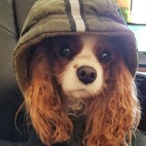 Bailey's Bits: Bailey on Problem Solving