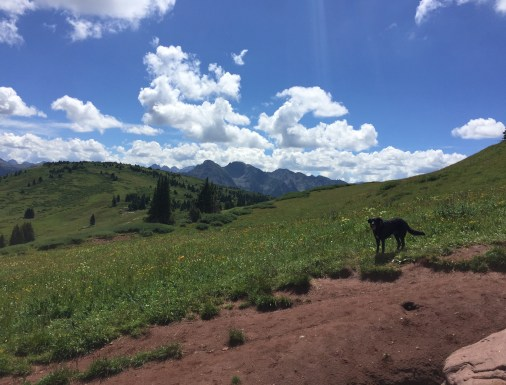 Hiking in Durango, dogs in Durango, Engineer Trail, Southwest Colorado