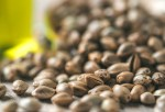 cbg seeds