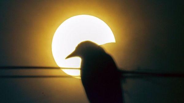 solar eclipse india