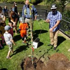 Moon tree lands in Durango
