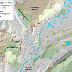 City to Thin Forests in Wildland-Urban Borders