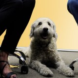 Chamber Chat: Is Your Pet the Next Top Dog or Coolest Cat?