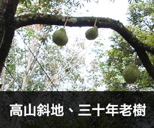 點解要揀高山斜地、三十年老樹嘅貓山王嚟食?