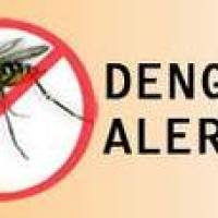 KNOW YOUR MOSQUITO FRIENDS