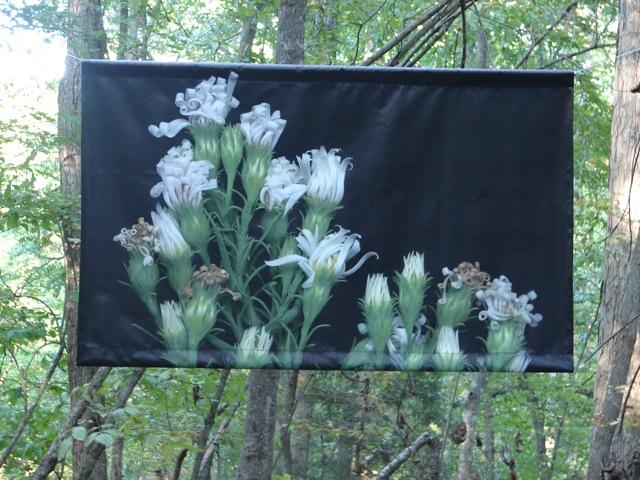 White Flowers in Summer