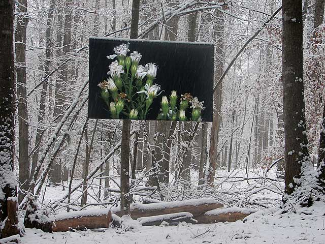 White Flowers in winter