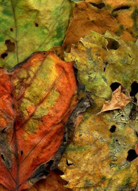 Leaves After Cezanne