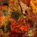 Leaves After de Kooning (Elaine)
