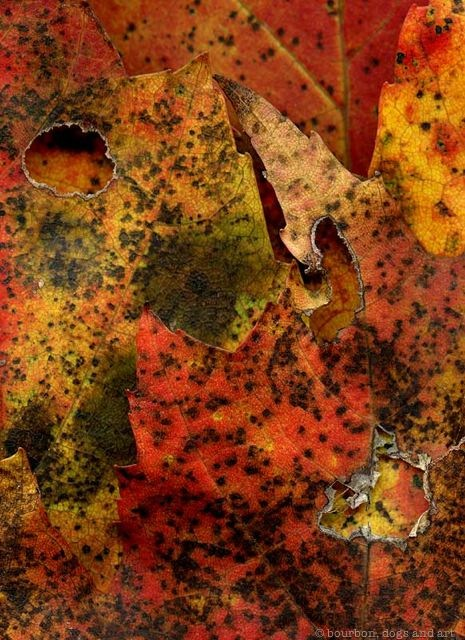 Leaves After de Kooning (Elaine)