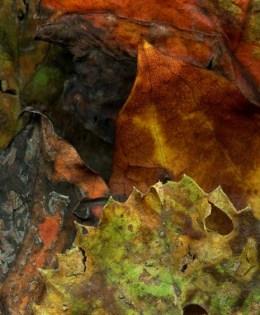 Leaves After Delacroix