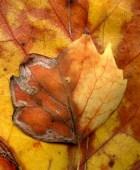 Leaves After Klimt