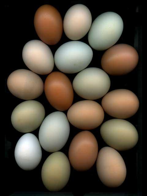 Eggs #14
