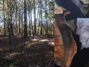 Leaves after Frankenthaler, Leaves after Oleszko (foreground)