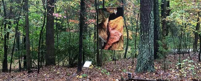 woodland banner